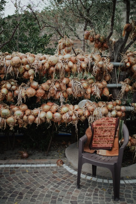 An onion patch growing at Da Gisella.