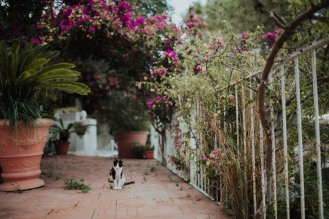 Animals run wild all over Ischia.